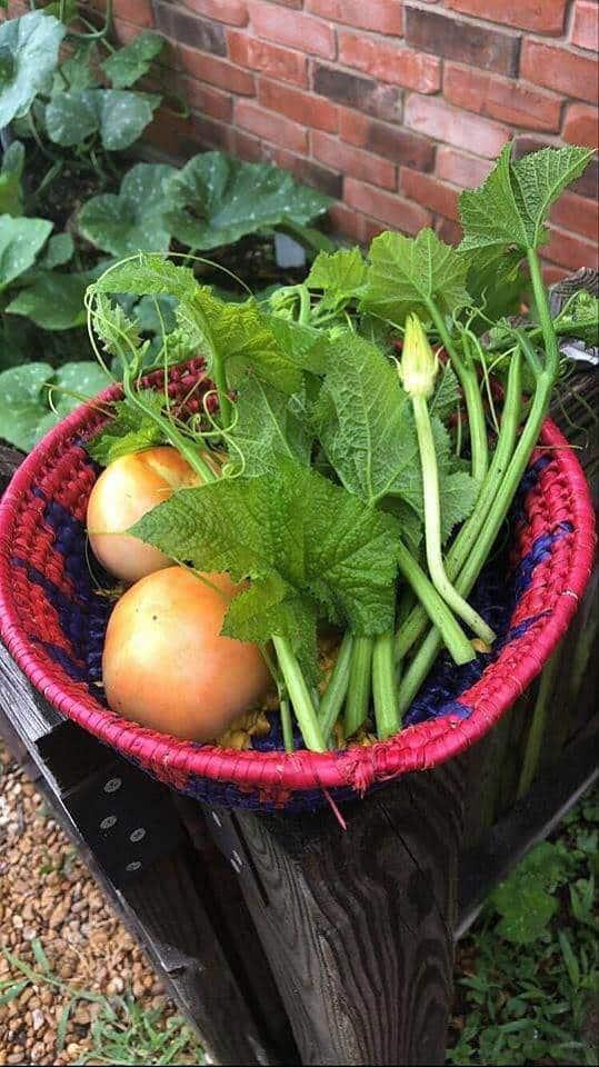 Tomates, y guías y hojas de calabaza